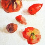 Heirloom tomato sketches by artist Beverly Brown