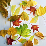 Watercolor Sketches of Autumn Leaves